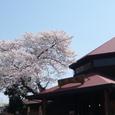 明覚駅の桜
